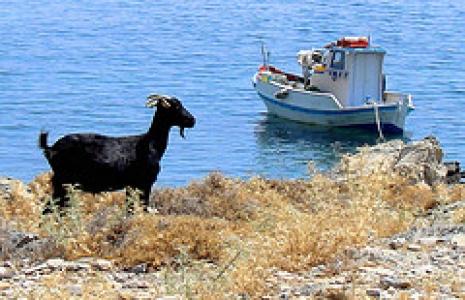 Chèvre et bateau