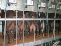 Milking room ©KPRA