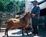 Skopelos mâle et éleveur grec